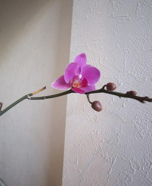 花咲いた♪